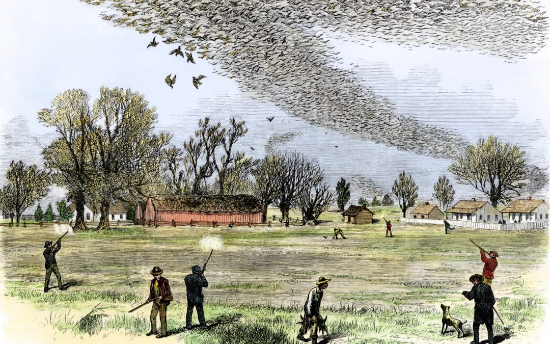 Why Did the Passenger Pigeon Die Off?