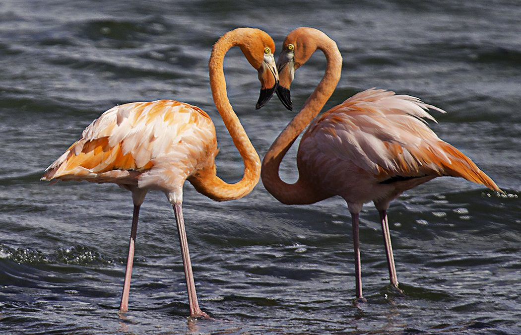 The Amazing Flamingo